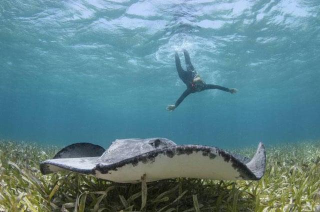 Vuelos a Belice Buceo en Shark.jpg