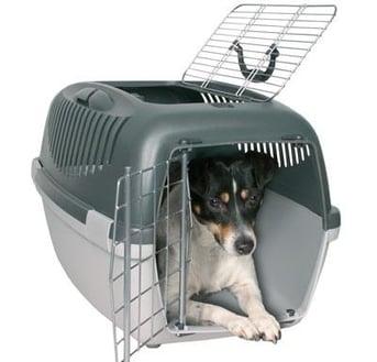 Vuelos a Guatemala Perro en su jaula.jpg