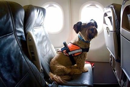 Vuelos a Guatemala perro en cabina.jpg