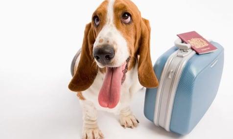 Vuelos a Guatemala viajando con mascotas..jpg