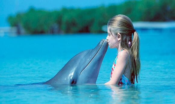 Vuelos a Roatán Delfines.jpg