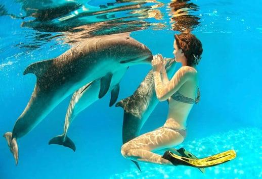 Vuelos a Roatán Nadando con delfines.jpg