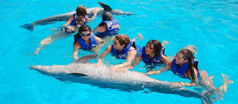 Vuelos a Roatán familia con delfines