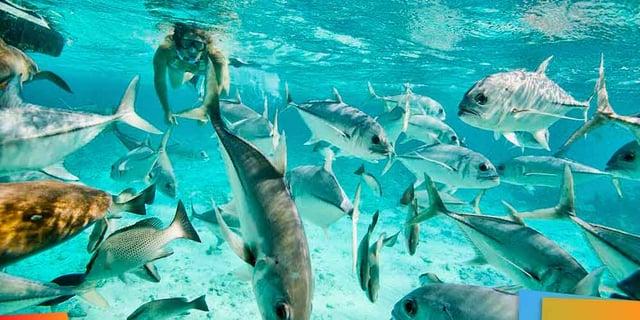 Vuelos a Belice, Ambergris Caye.jpg