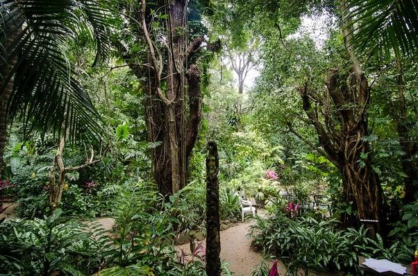 Vuelos a Roatan, Jardín Botánico de Carambola.jpg