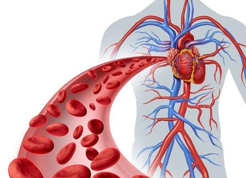 Vuelos a Roatan, circulación sanguínea