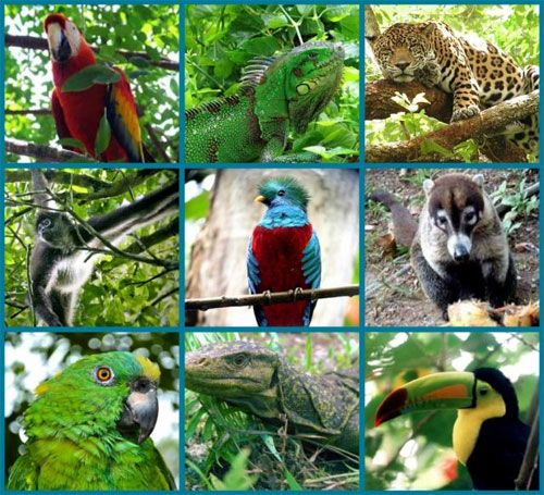 animales-america-central