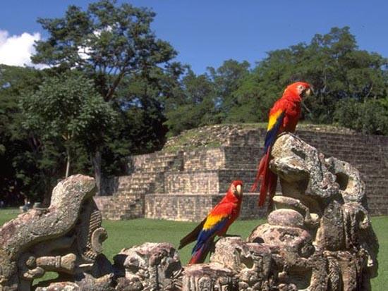 Vuelos a Honduras Ruinas de copán.jpg